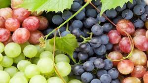 Manfaat Si Mungil Buah Anggur
